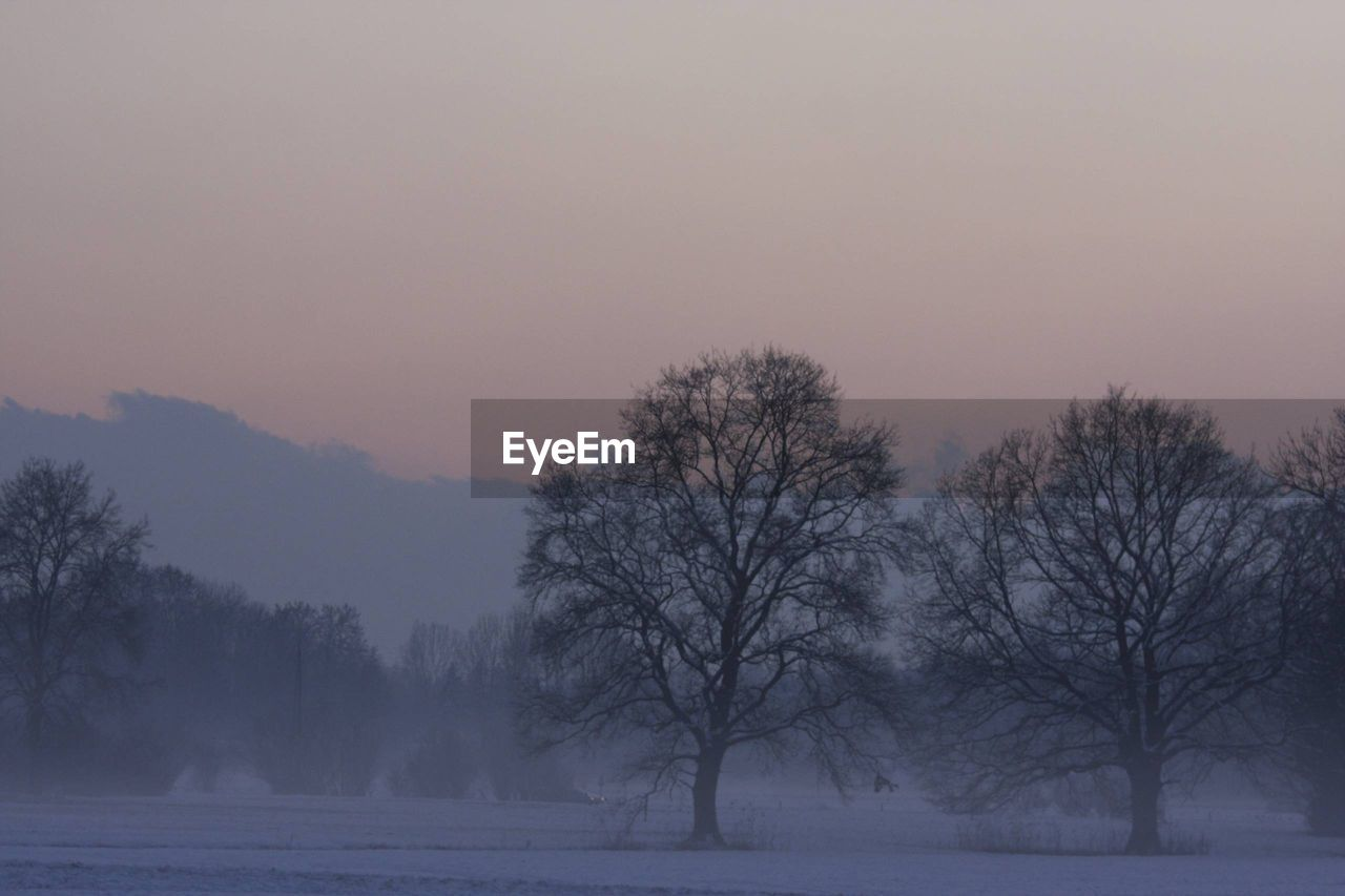 tree, cold temperature, winter, snow, beauty in nature, plant, scenics - nature, sky, fog, bare tree, environment, tranquility, tranquil scene, landscape, no people, nature, non-urban scene, land, sunset, outdoors, snowing