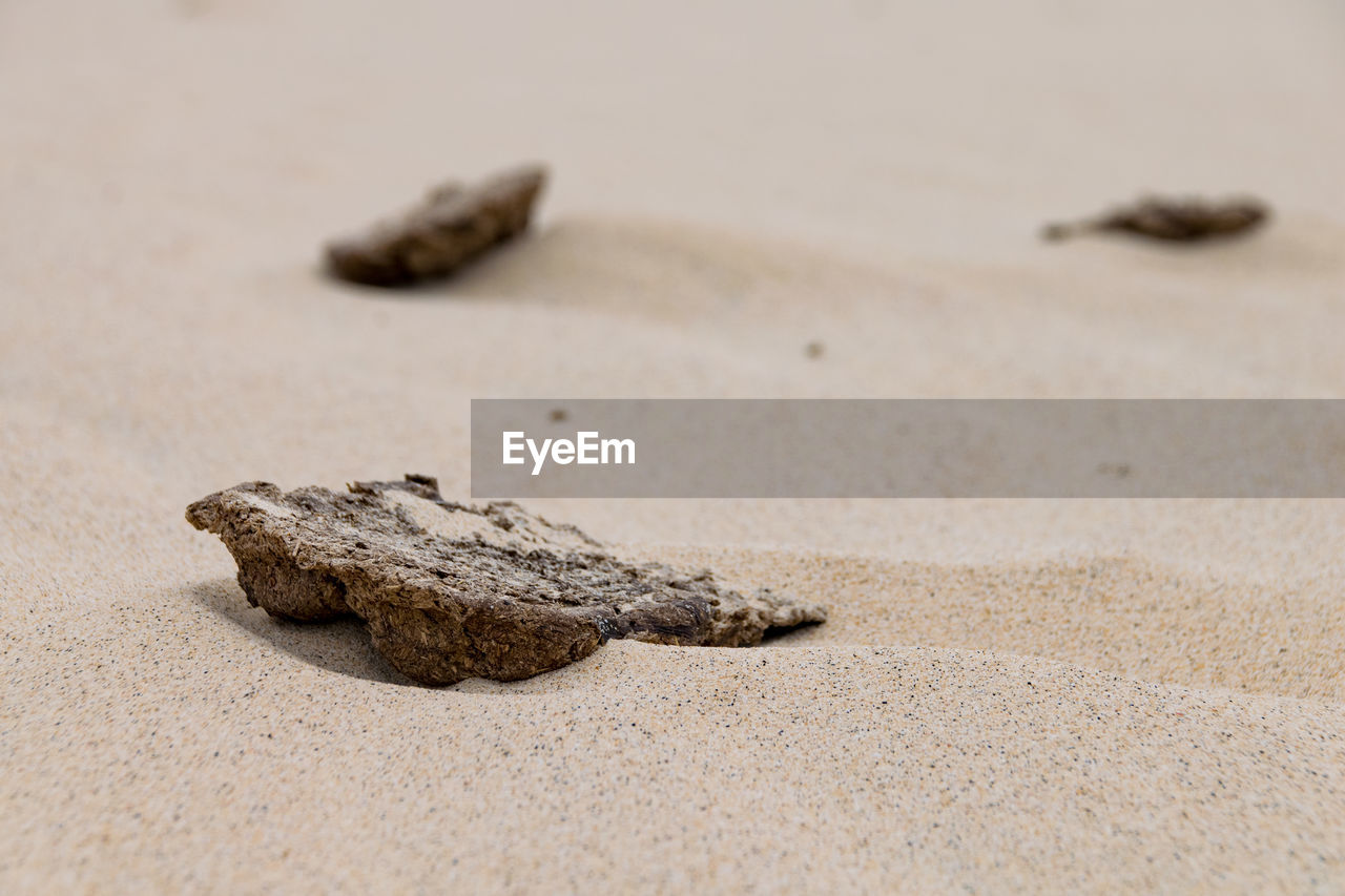 land, sand, beach, no people, close-up, animal wildlife, selective focus, nature, animal, one animal, animals in the wild, animal themes, reptile, day, sea, outdoors, focus on foreground, brown, vertebrate, marine