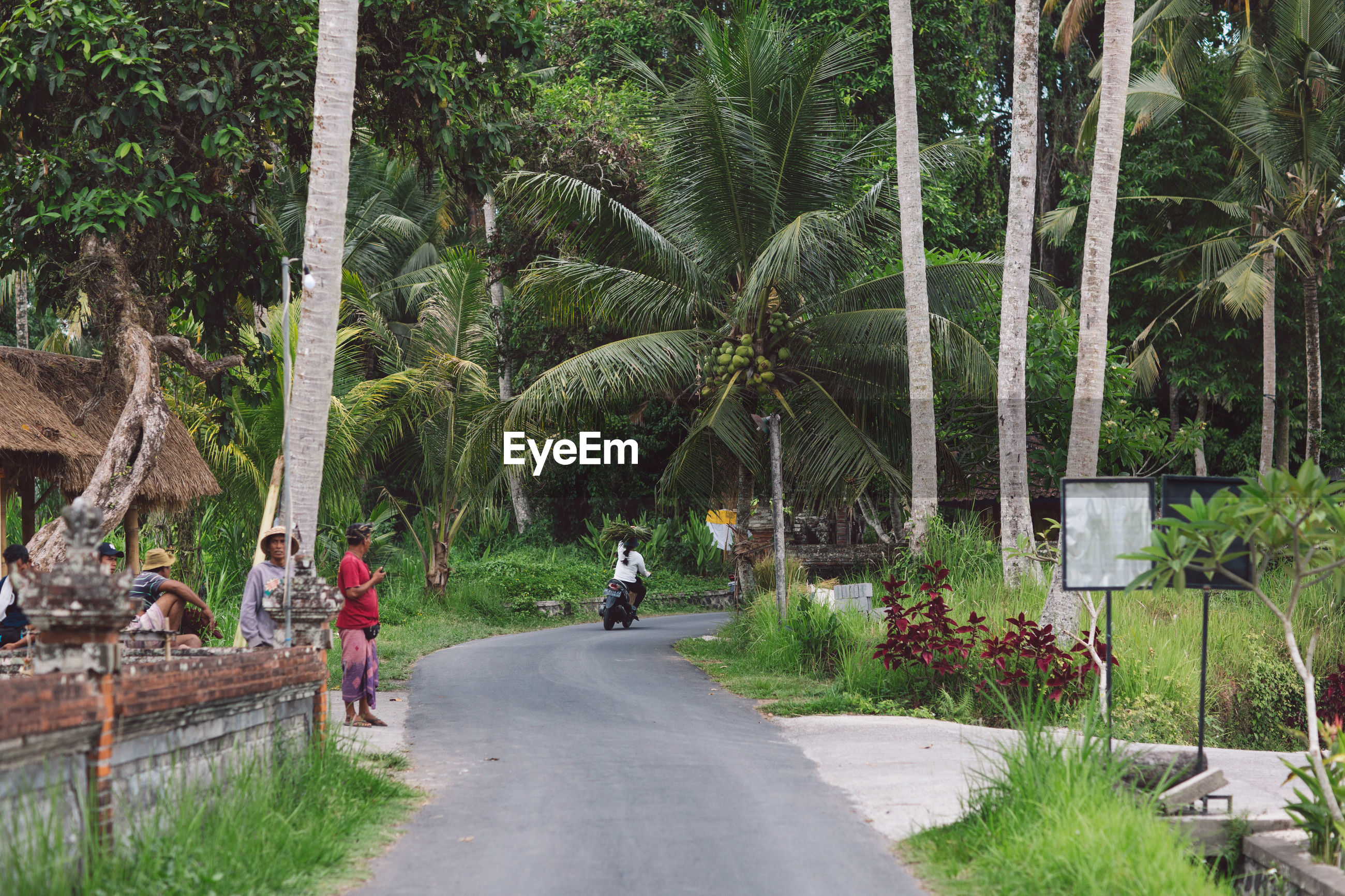PEOPLE BY PALM TREES ON ROAD