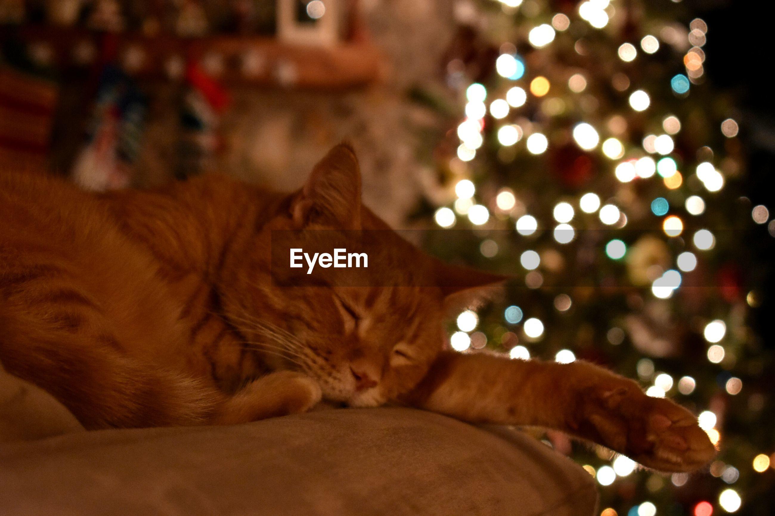 CLOSE-UP OF GINGER CAT LYING ON ILLUMINATED CHRISTMAS TREE