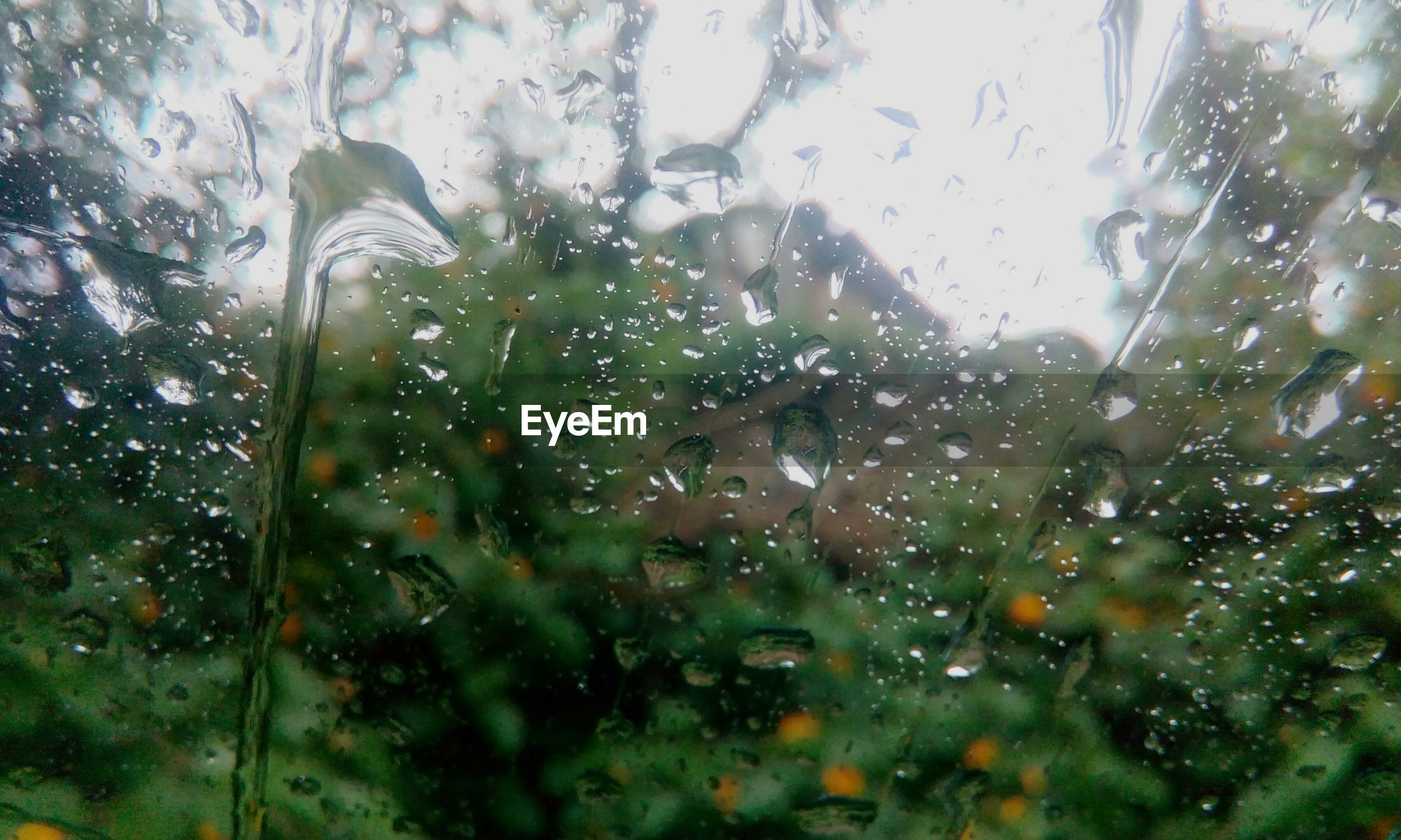 drop, transparent, wet, window, glass - material, water, indoors, rain, raindrop, full frame, glass, close-up, focus on foreground, backgrounds, weather, tree, season, no people, nature, water drop