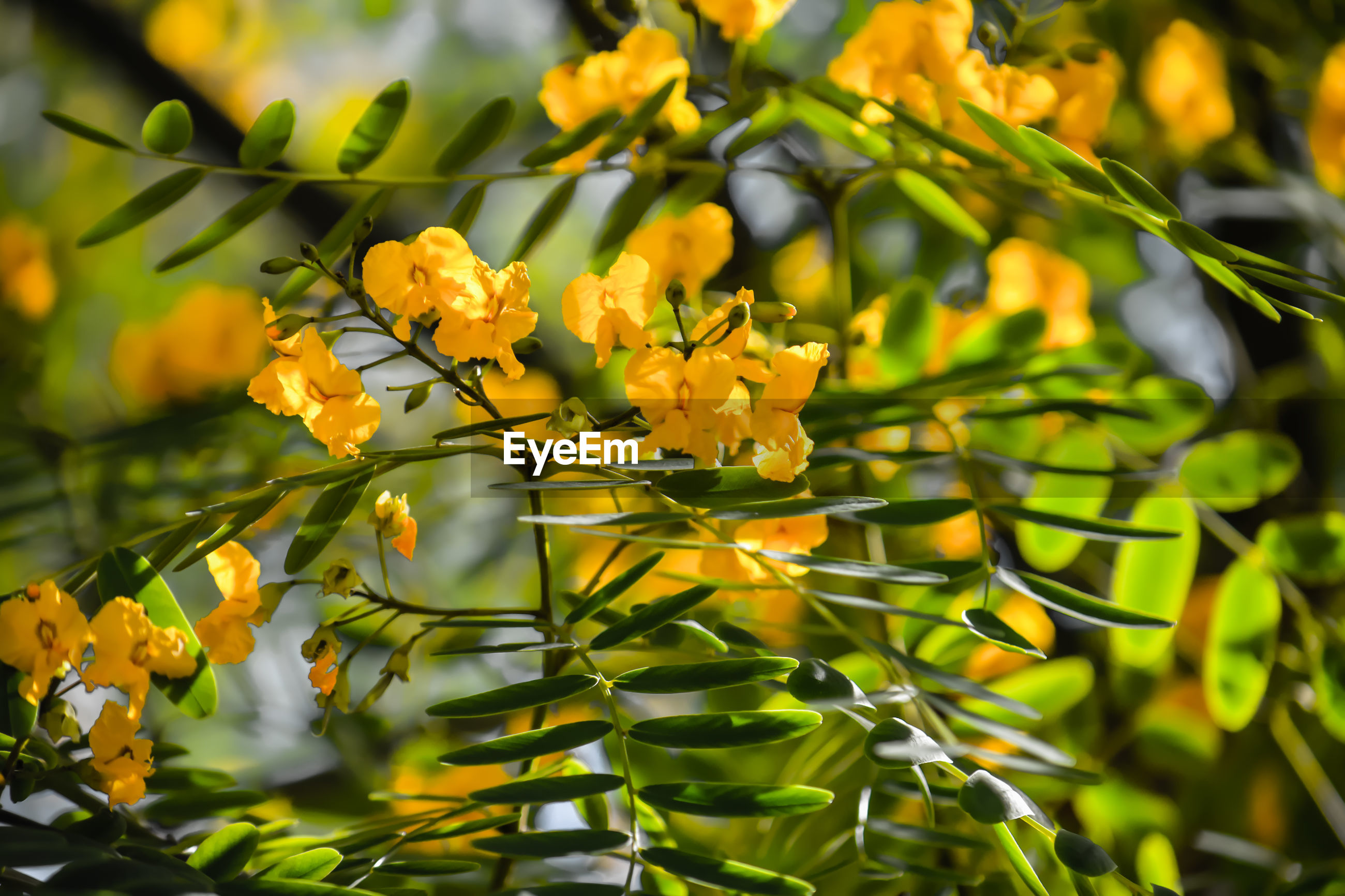 CLOSE-UP OF YELLOW FLOWERING PLANT AGAINST PLANTS