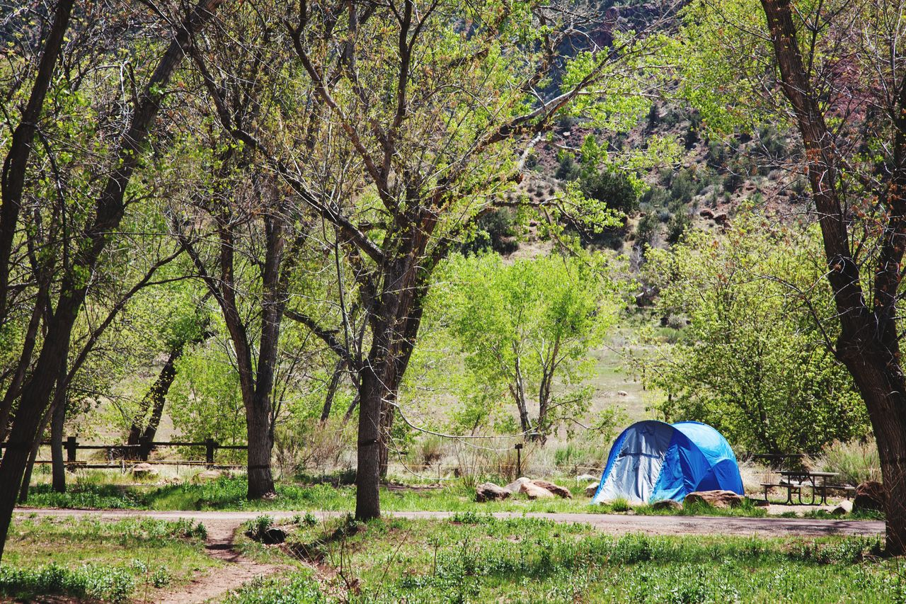 tree, camping, tent, plant, nature, land, adventure, forest, grass, people, beauty in nature, outdoors, scenics - nature, travel, travel destinations, tranquility, landscape, environment, green color, day