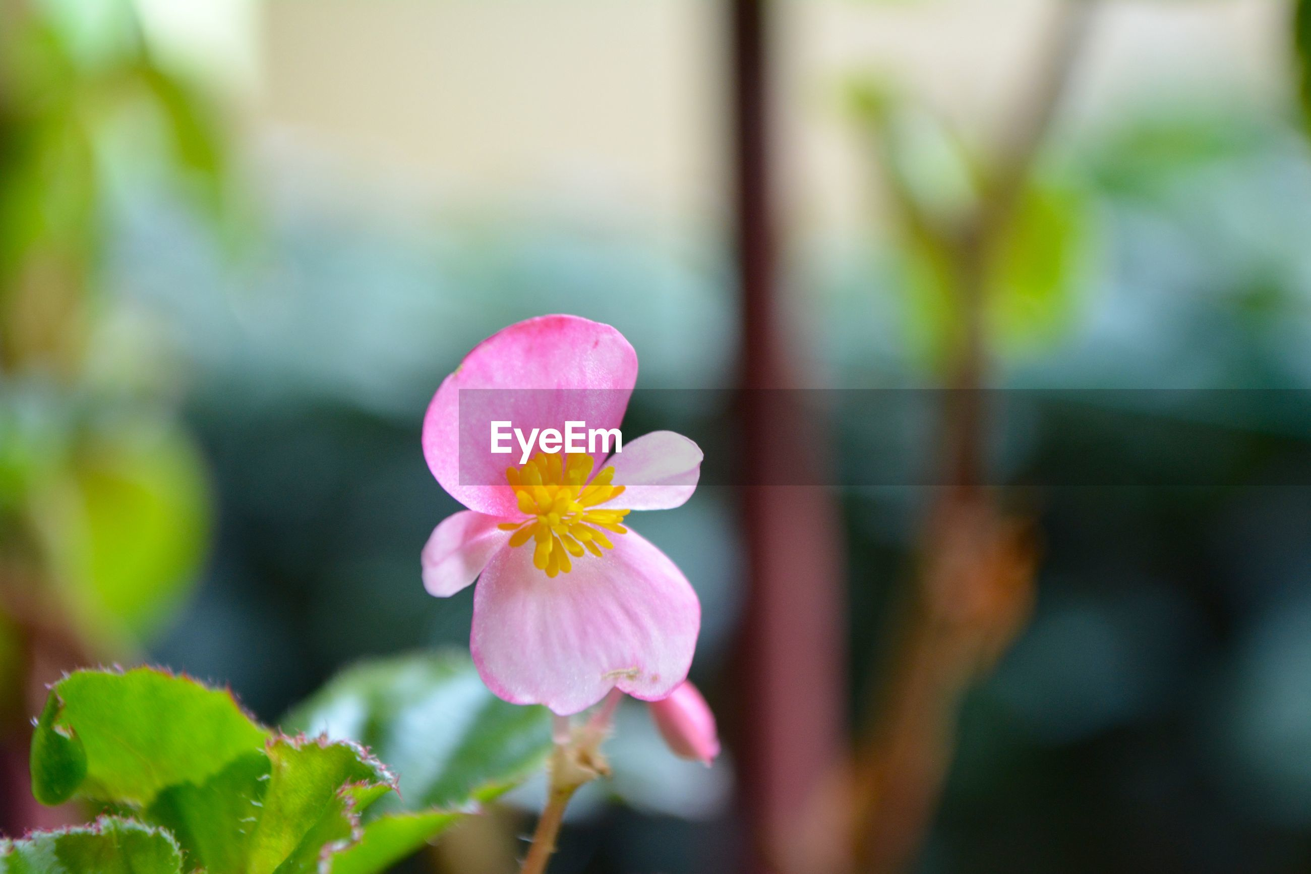 CLOSE-UP OF PINK FLOWER AGAINST PLANTS