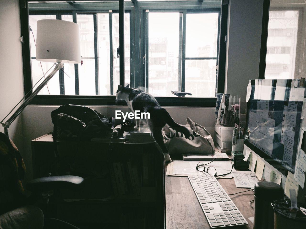 Cat On Office Desk