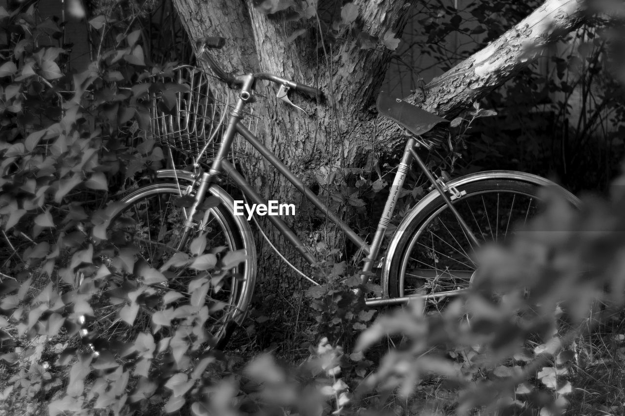 transportation, bicycle, land vehicle, selective focus, mode of transportation, day, no people, plant, wheel, nature, land, abandoned, tree, field, obsolete, stationary, run-down, outdoors, growth, damaged, spoke, deterioration