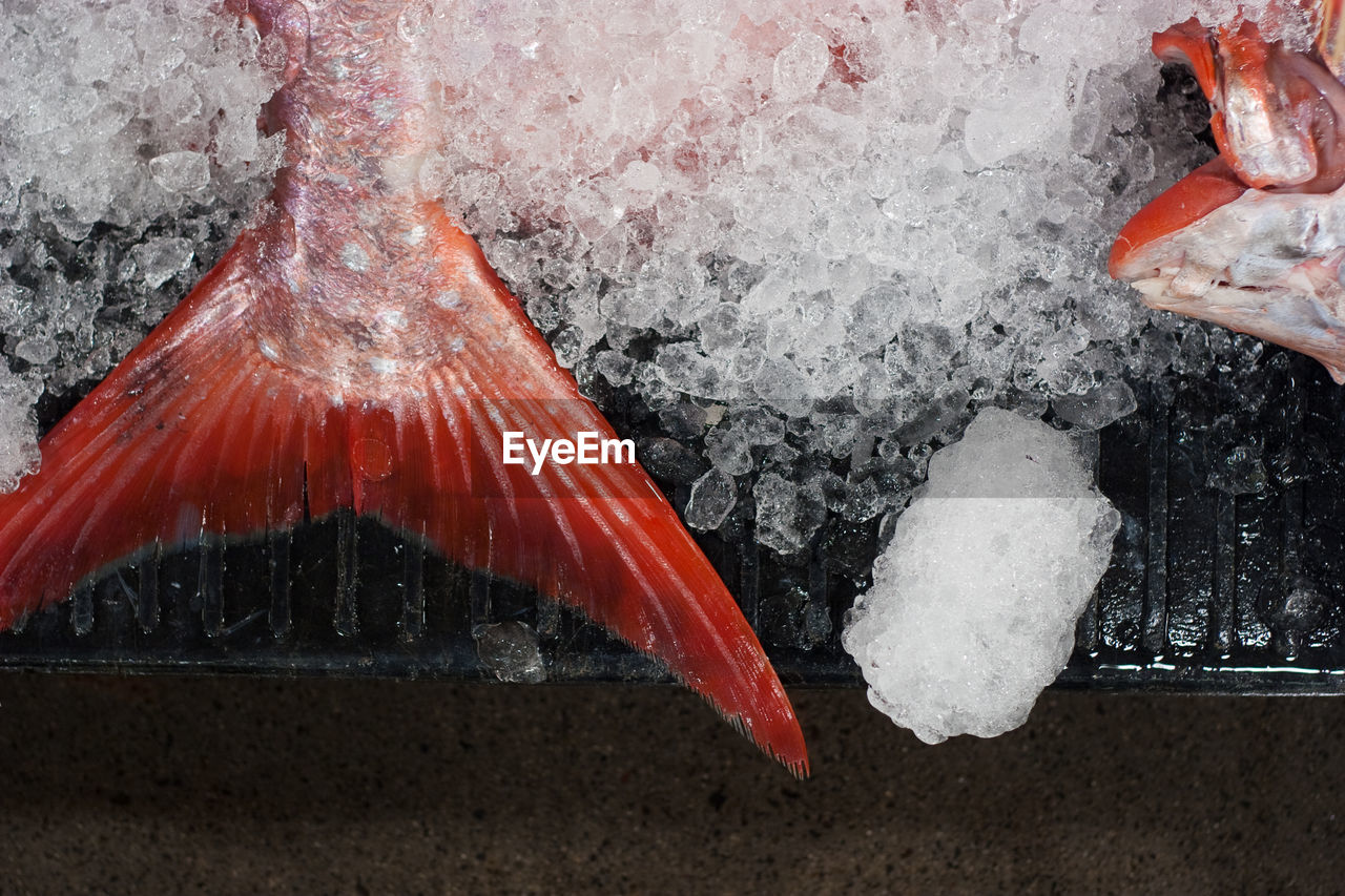 Close-up of fish with ice at market stall