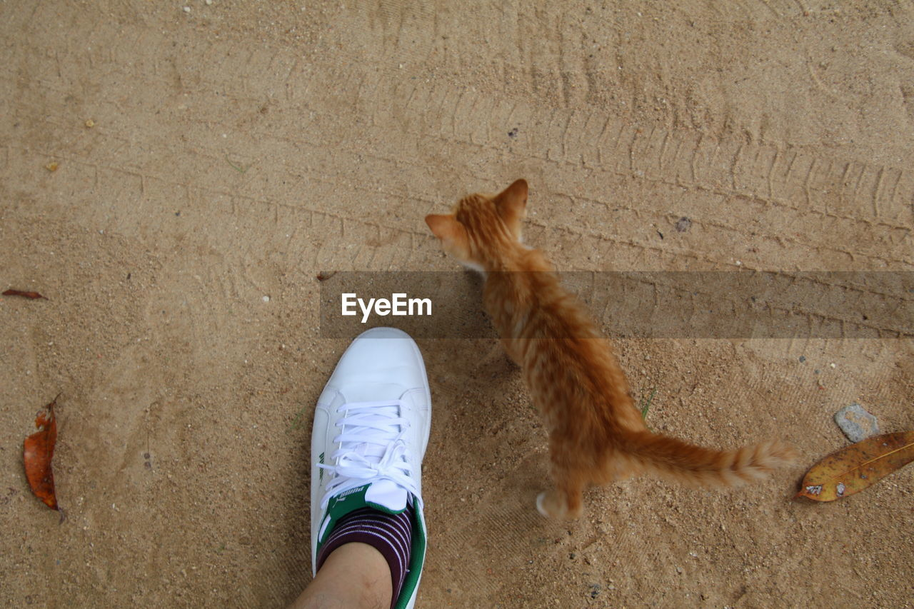 real people, one person, low section, pets, human leg, domestic animals, personal perspective, one animal, mammal, human body part, high angle view, unrecognizable person, lifestyles, leisure activity, domestic cat, day, outdoors, standing, sand, men, directly above, feline, women, human hand, nature, people