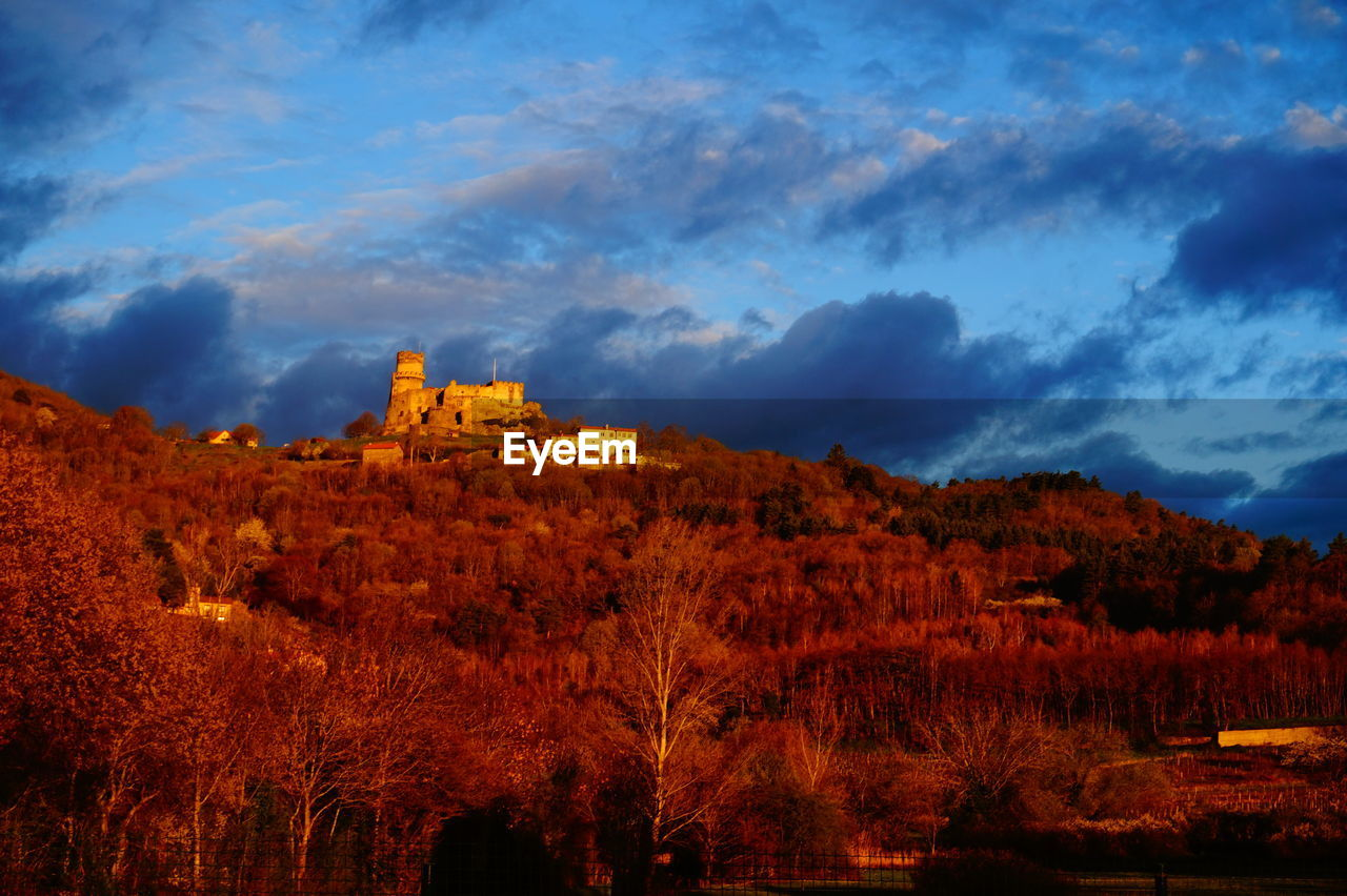 Historic castle on tree mountain against sky