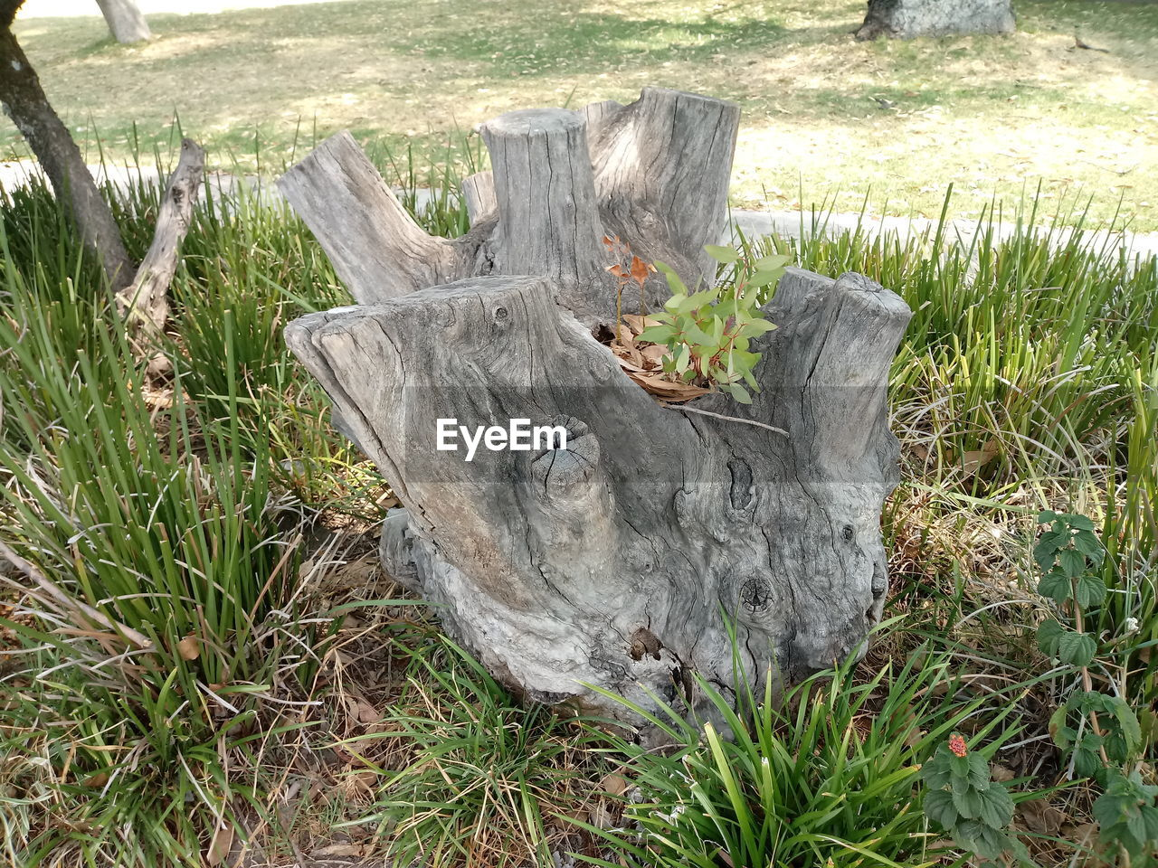 plant, land, grass, field, tree, nature, wood - material, day, no people, wood, log, growth, tree stump, green color, outdoors, bark, timber, forest, tranquility, tree trunk