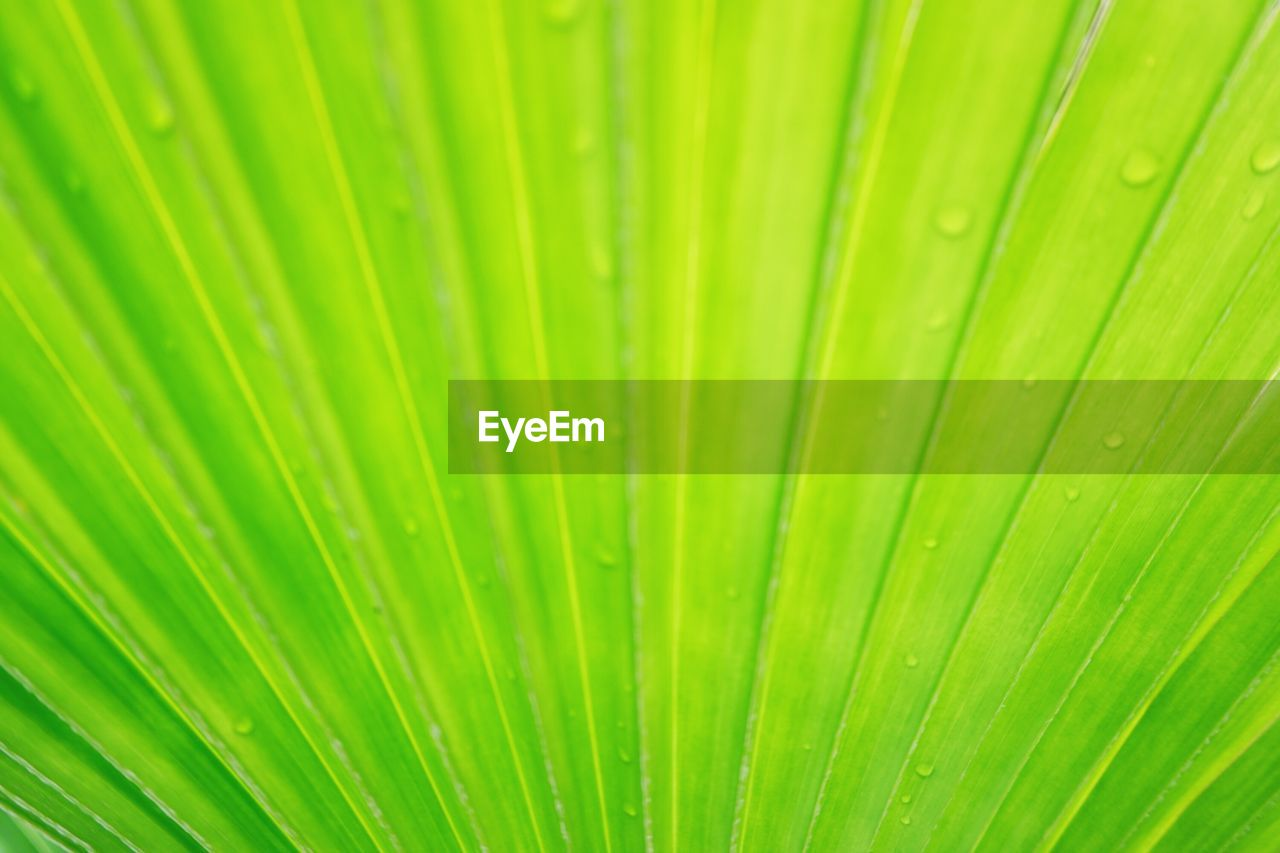 green color, leaf, palm leaf, backgrounds, full frame, close-up, plant part, beauty in nature, growth, no people, tropical climate, pattern, palm tree, natural pattern, plant, nature, frond, freshness, textured, wet, outdoors, abstract, leaves, abstract backgrounds, rain, dew, rainforest