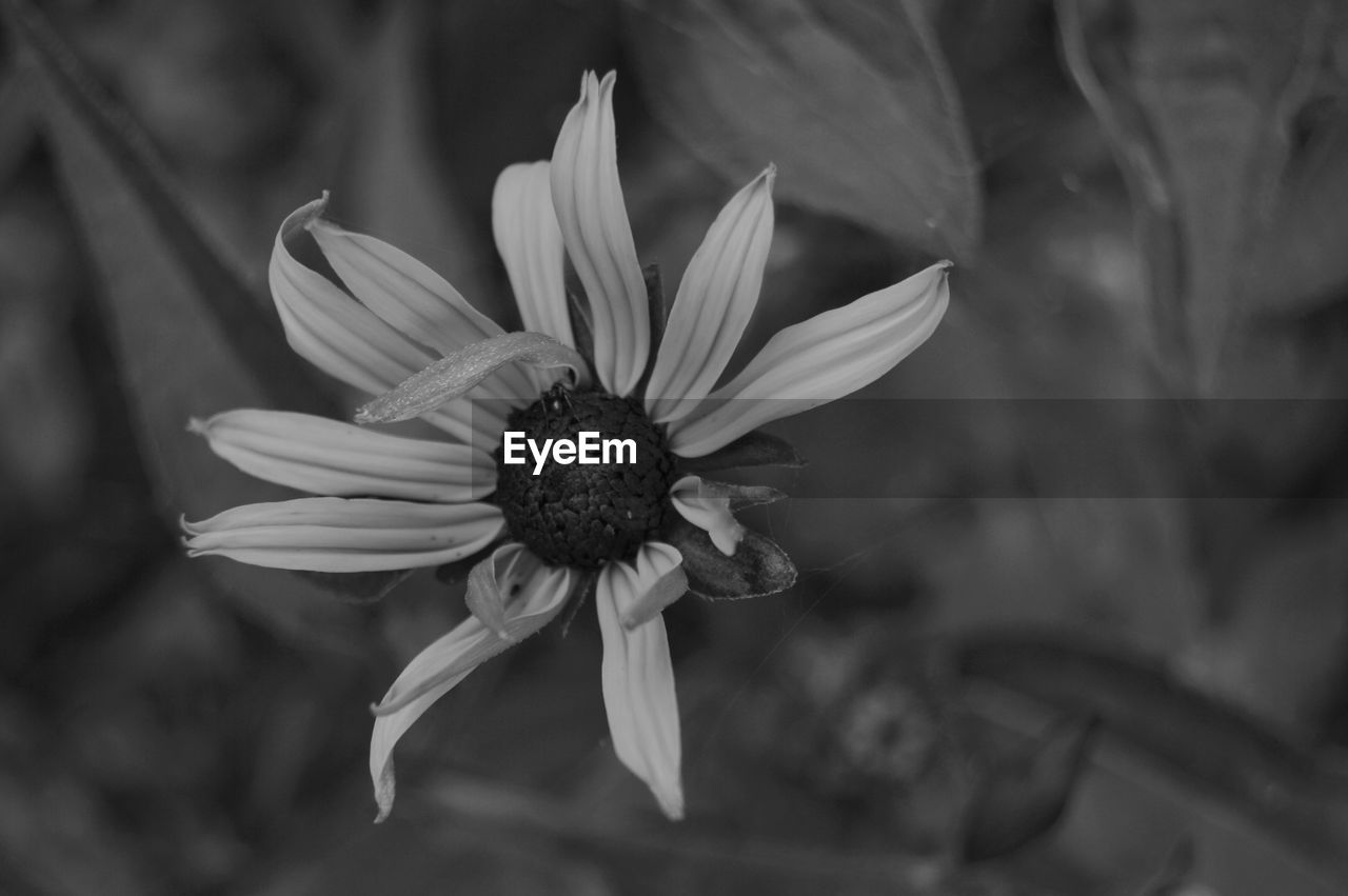 flower, flowering plant, vulnerability, fragility, petal, plant, freshness, beauty in nature, growth, close-up, flower head, inflorescence, pollen, day, focus on foreground, nature, no people, botany, outdoors, sepal