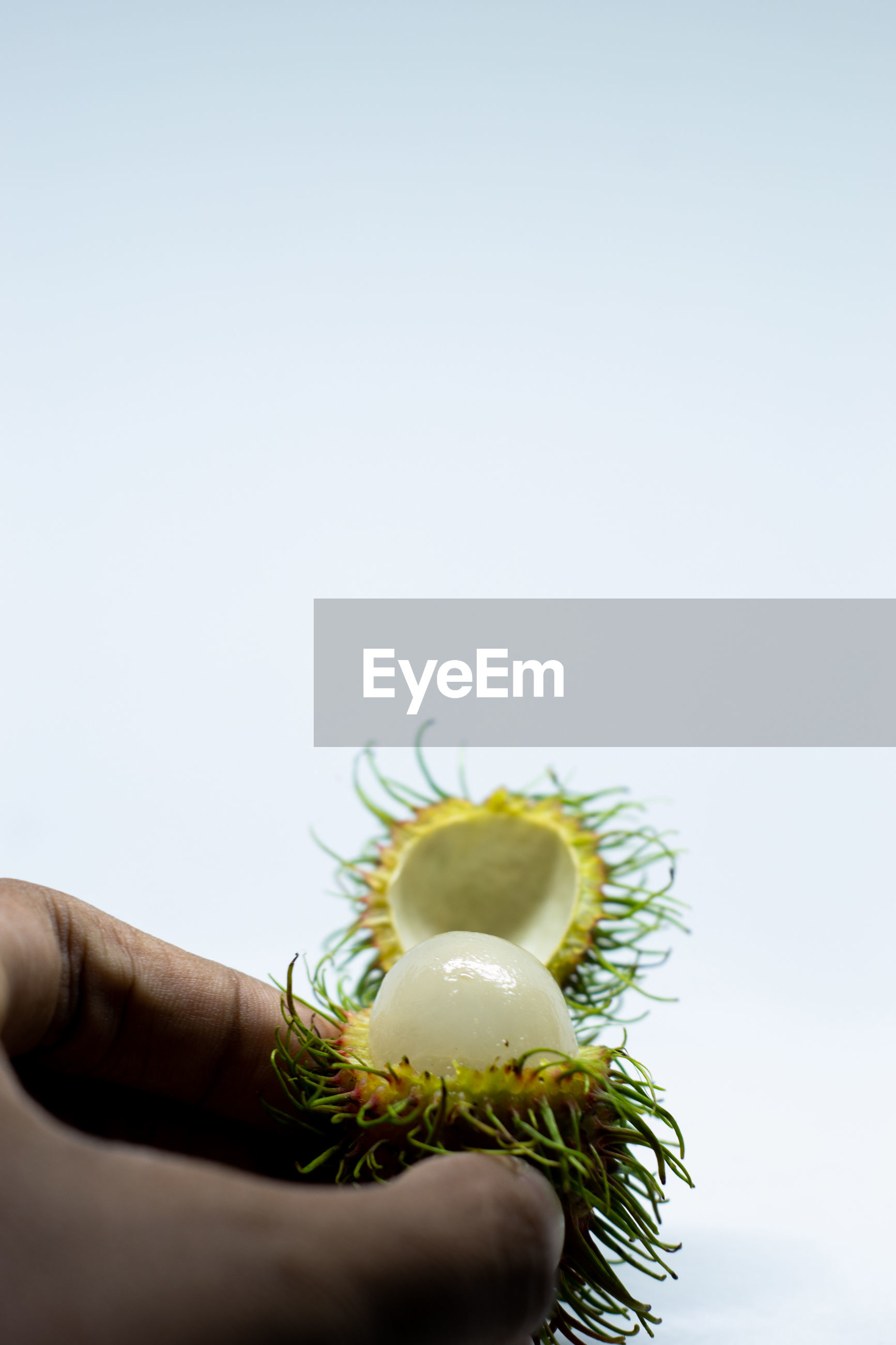 Close-up of hand holding rambutan against white background