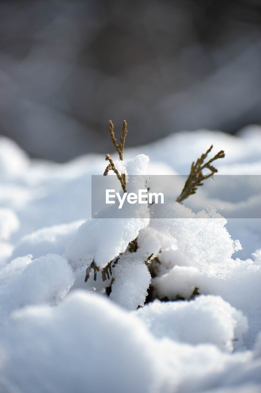 CLOSE-UP OF INSECT ON SNOW COVERED