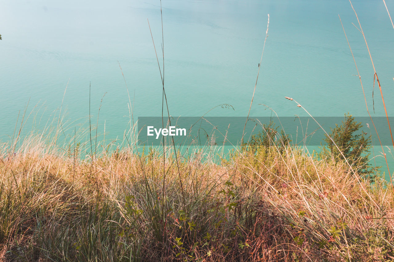water, beauty in nature, plant, growth, tranquility, grass, sea, no people, beach, day, nature, tranquil scene, scenics - nature, land, sand, outdoors, non-urban scene, marram grass, sky