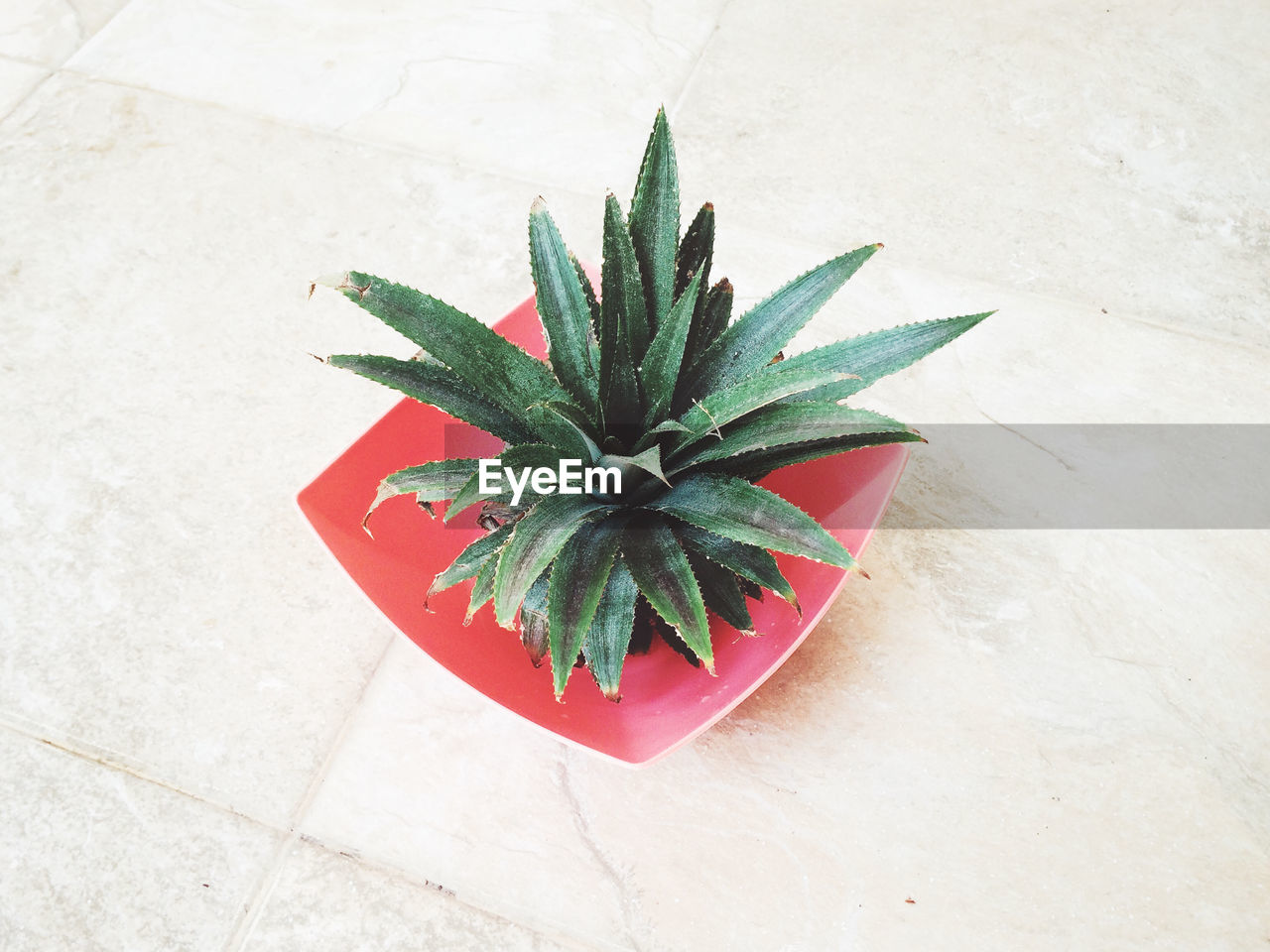 High Angle View Of Cactus In Bowl On Tiled Floor