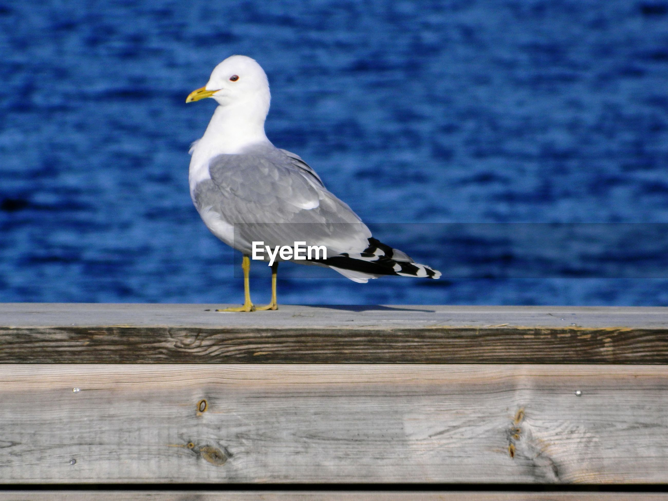 Seagull perching on sea shore
