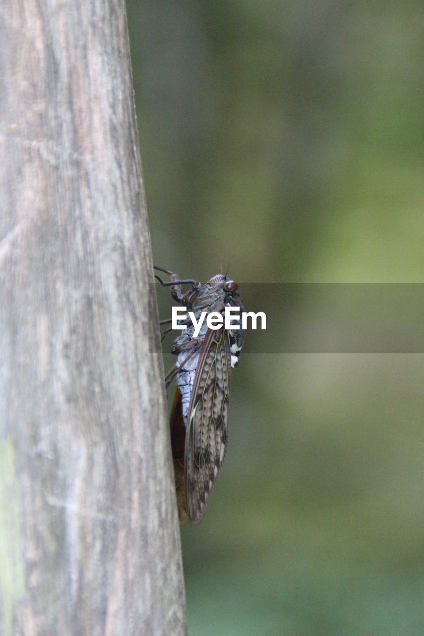 animal themes, animals in the wild, animal, one animal, animal wildlife, invertebrate, insect, tree trunk, trunk, close-up, no people, tree, day, plant, nature, focus on foreground, selective focus, outdoors, wood - material, beauty in nature, butterfly - insect