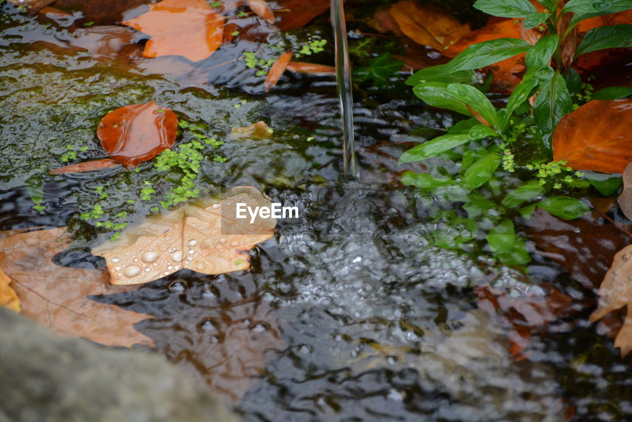 nature, leaf, water, beauty in nature, high angle view, no people, freshness, outdoors, day, growth, fragility, close-up
