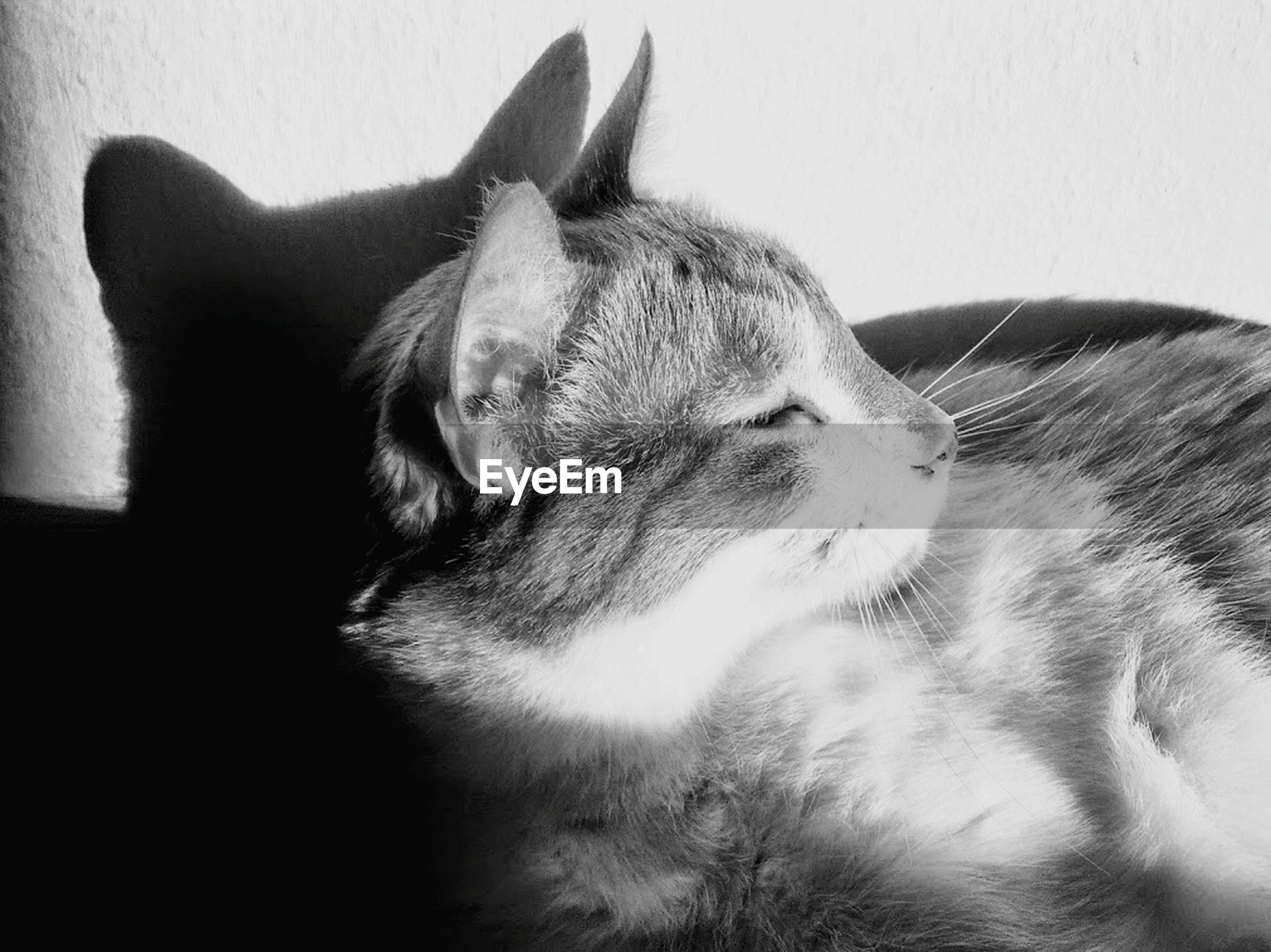 domestic animals, mammal, animal themes, pets, one animal, indoors, domestic cat, relaxation, cat, animal head, resting, feline, sleeping, close-up, lying down, eyes closed, whisker, animal body part, zoology, no people