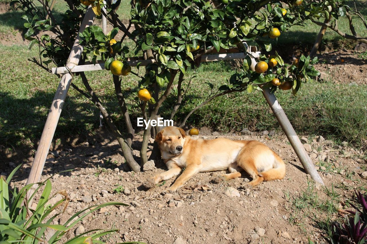 plant, animal, tree, animal themes, mammal, nature, vertebrate, day, fruit, one animal, no people, healthy eating, domestic animals, fruit tree, land, leaf, field, growth, outdoors, pets