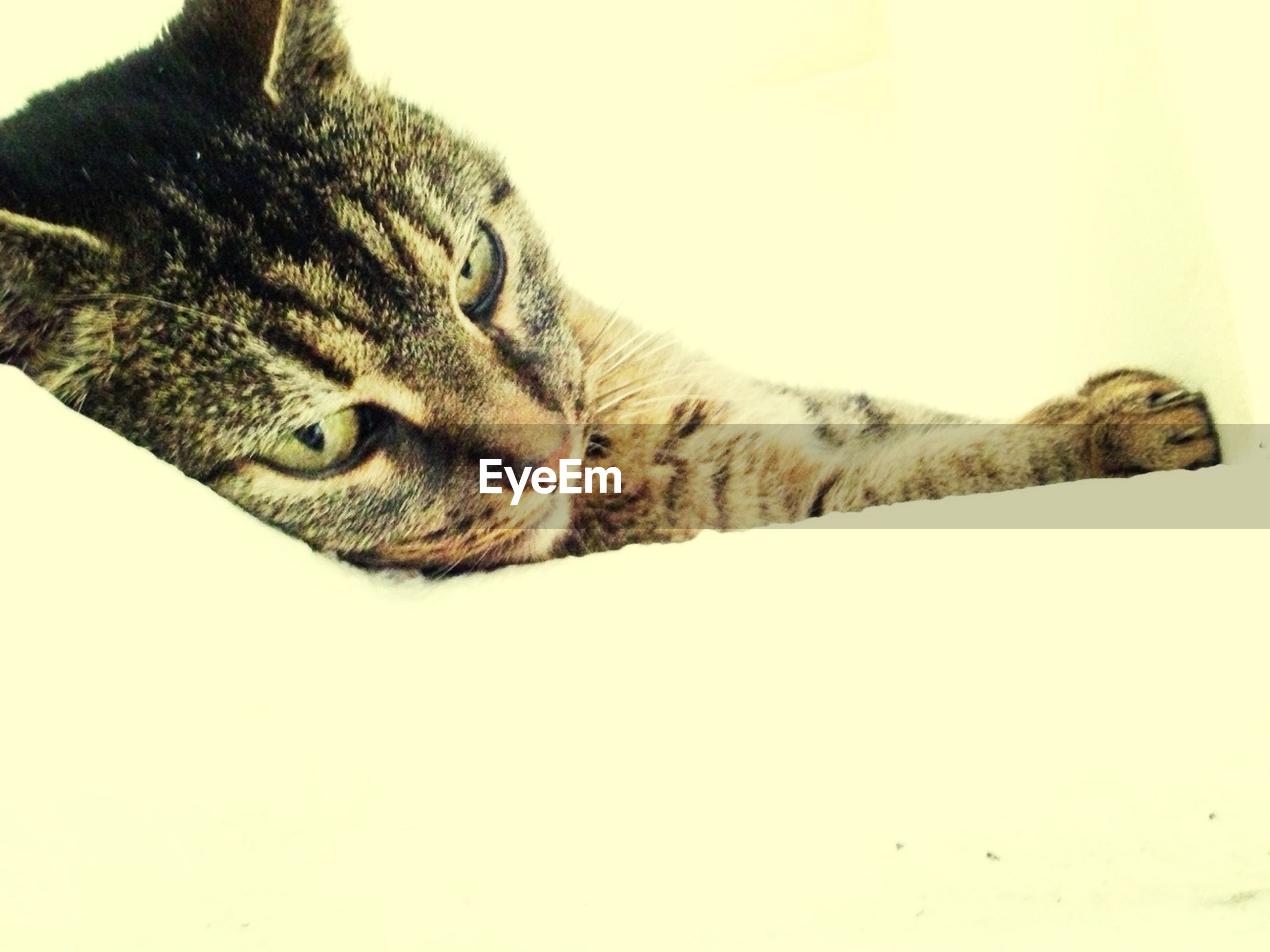 one animal, animal themes, domestic animals, mammal, pets, domestic cat, cat, copy space, animal head, feline, clear sky, looking away, whisker, close-up, alertness, portrait, animal body part, no people, zoology, side view