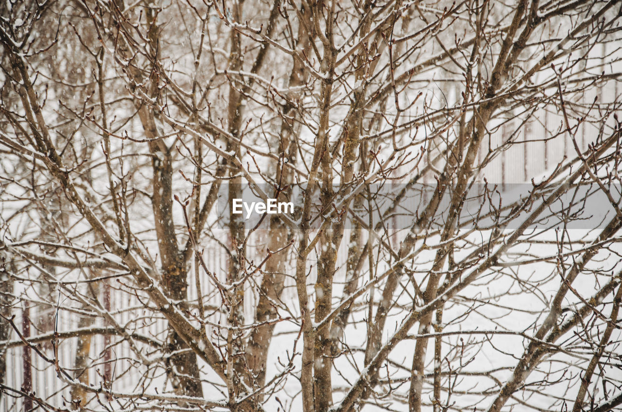 tree, winter, cold temperature, plant, branch, snow, bare tree, no people, nature, tranquility, day, outdoors, land, scenics - nature, forest, beauty in nature, frozen, environment, backgrounds, snowing, blizzard