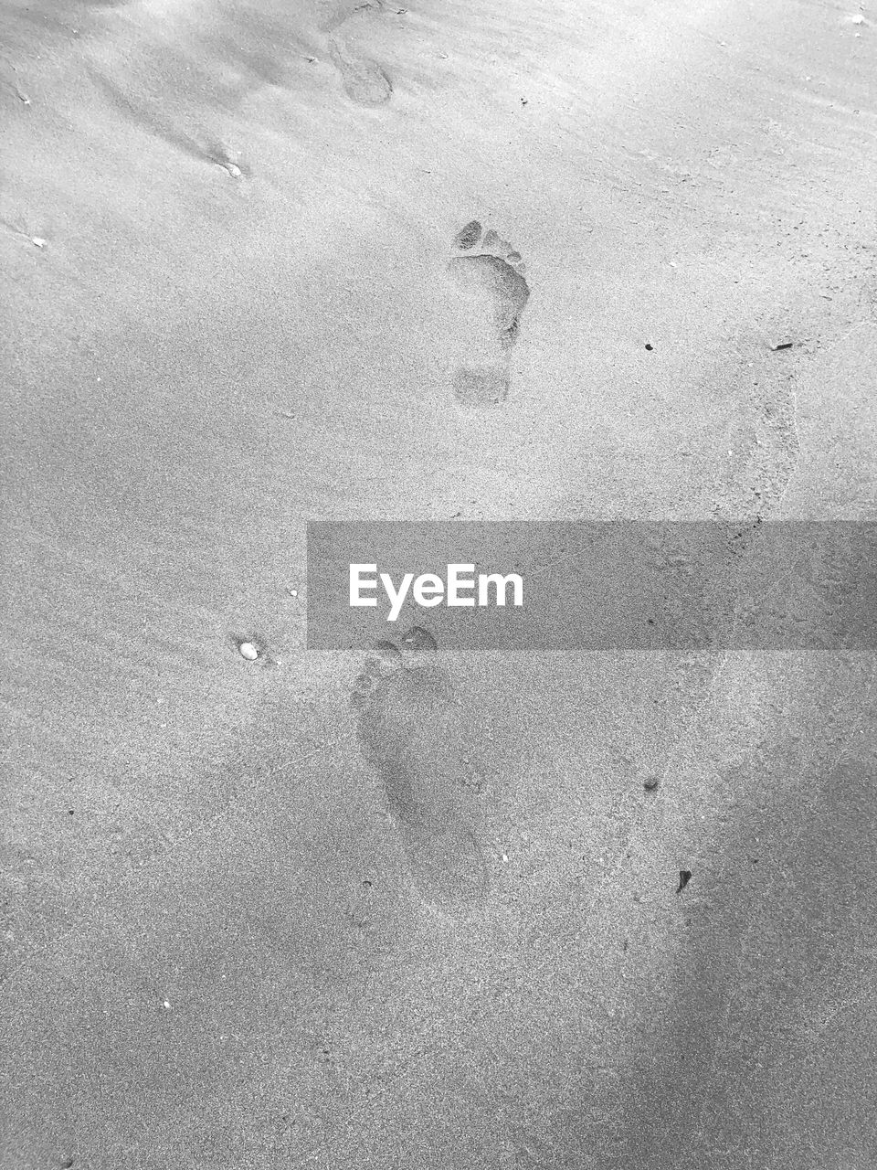 high angle view, footprint, paw print, day, sand, outdoors, nature, full frame, no people, beach, track - imprint