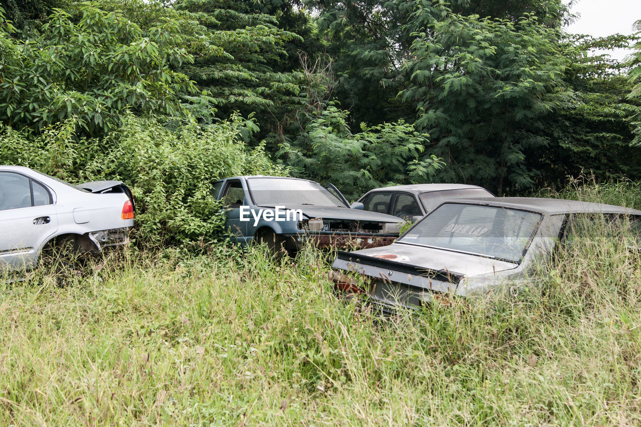 car, transportation, tree, day, mode of transport, damaged, green color, land vehicle, growth, abandoned, no people, nature, outdoors, grass, plant