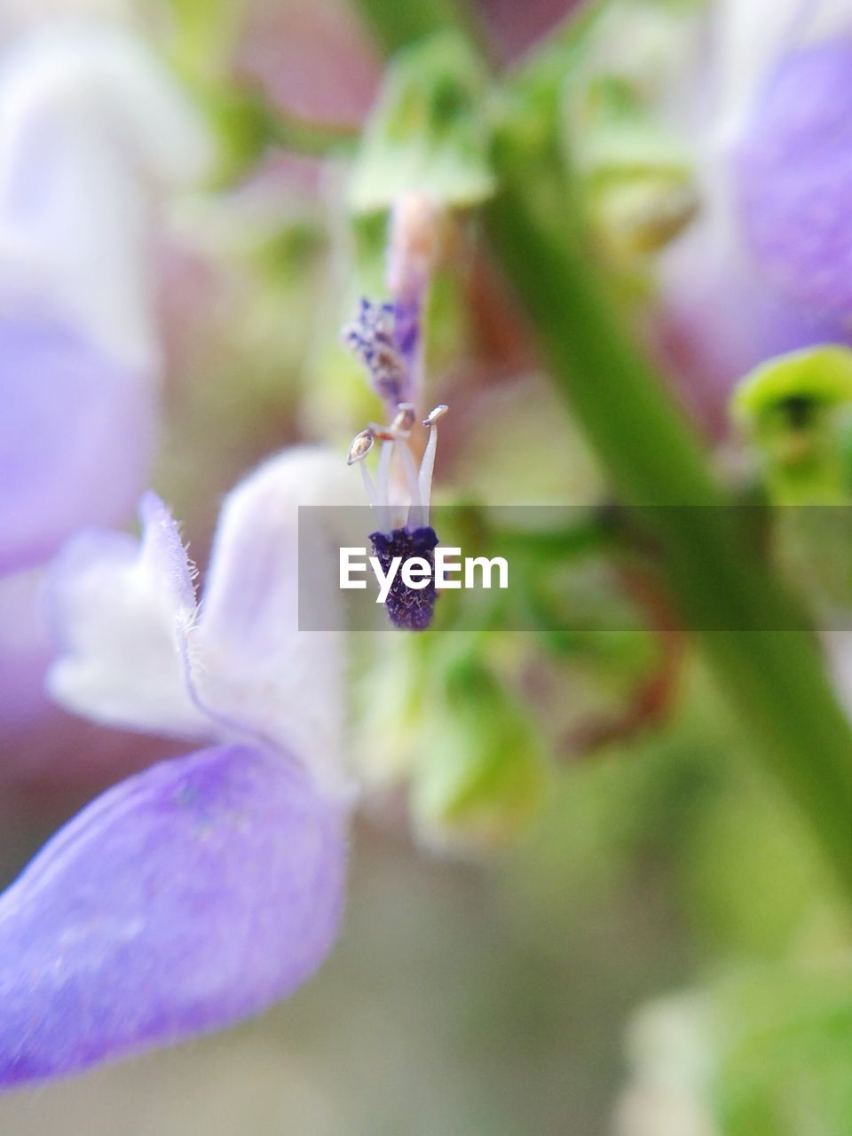 flower, flowering plant, plant, growth, fragility, vulnerability, freshness, close-up, beauty in nature, selective focus, purple, petal, no people, nature, inflorescence, day, flower head, botany, outdoors, bud, springtime