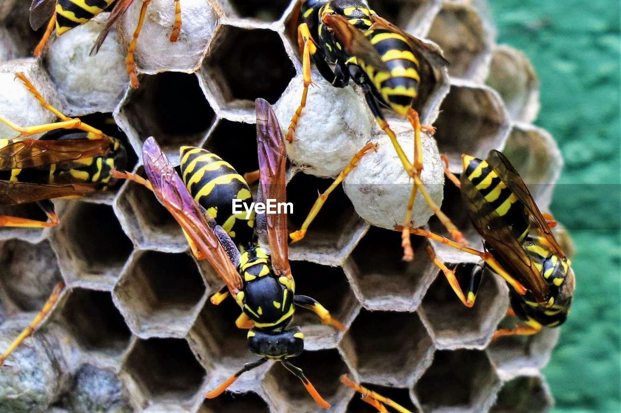 animal wildlife, group of animals, animals in the wild, insect, animal, animal themes, close-up, invertebrate, bee, no people, nature, day, beehive, honeycomb, apiculture, focus on foreground, honey bee, wasp, medium group of animals, beauty in nature