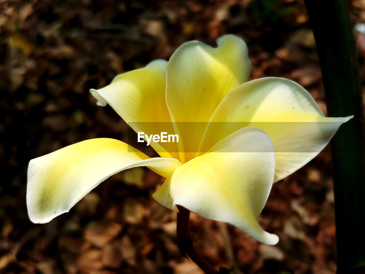 petal, flower, flower head, fragility, freshness, growth, beauty in nature, close-up, yellow, day, nature, no people, outdoors, plant, blooming