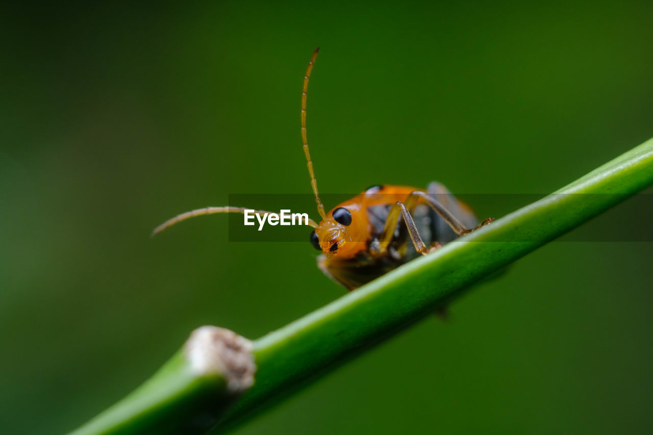one animal, green color, animal themes, animals in the wild, insect, animal wildlife, close-up, no people, leaf, day, nature, outdoors