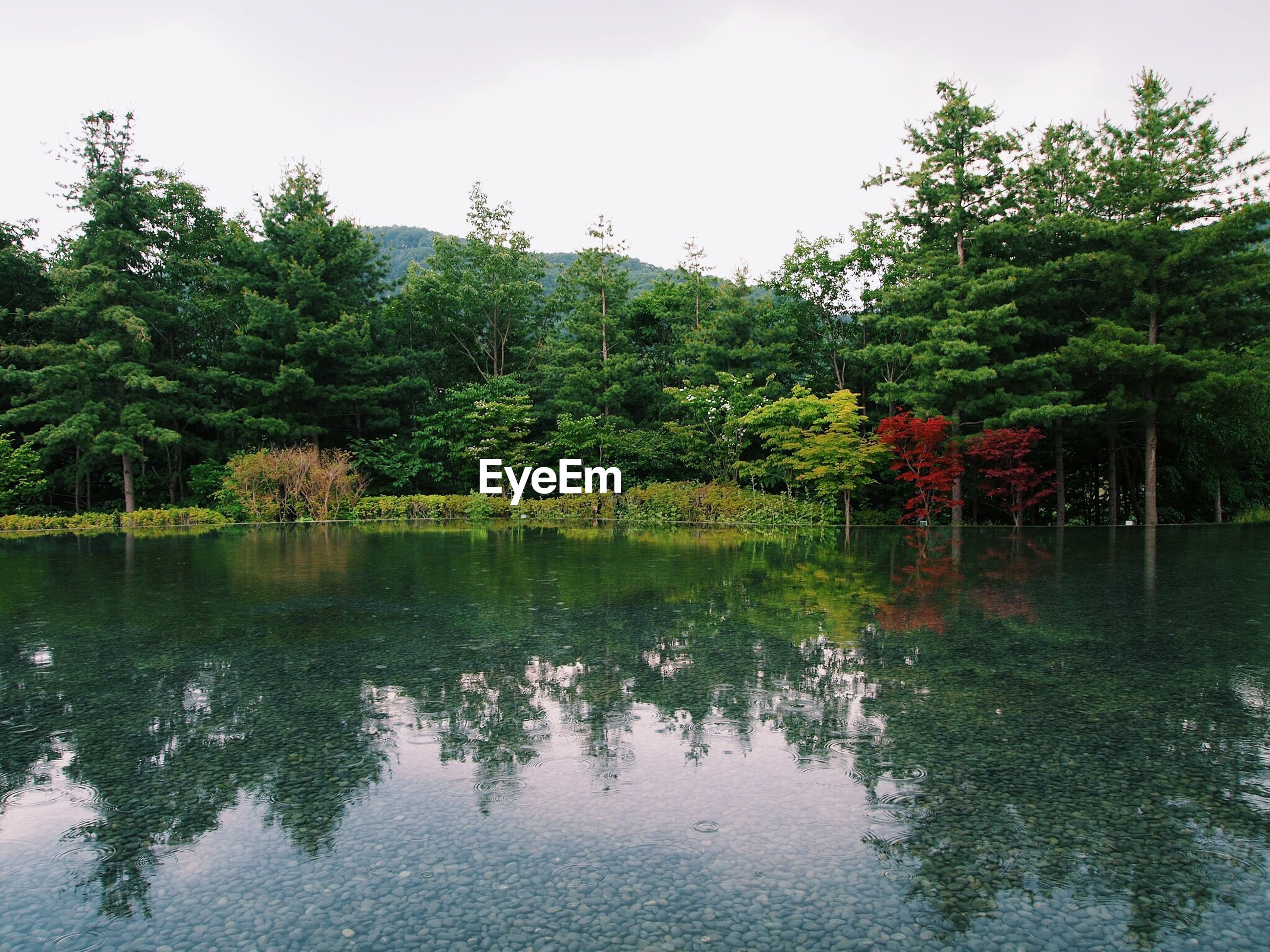 Scenic view of calm lake and trees against clear sky