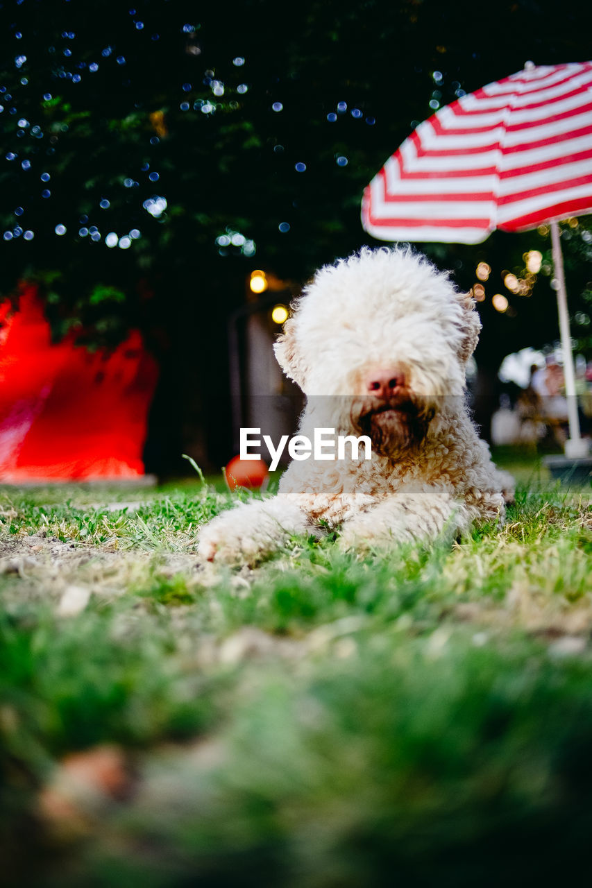dog, one animal, pets, animal themes, mammal, domestic animals, selective focus, no people, grass, outdoors, day, nature, close-up, tree
