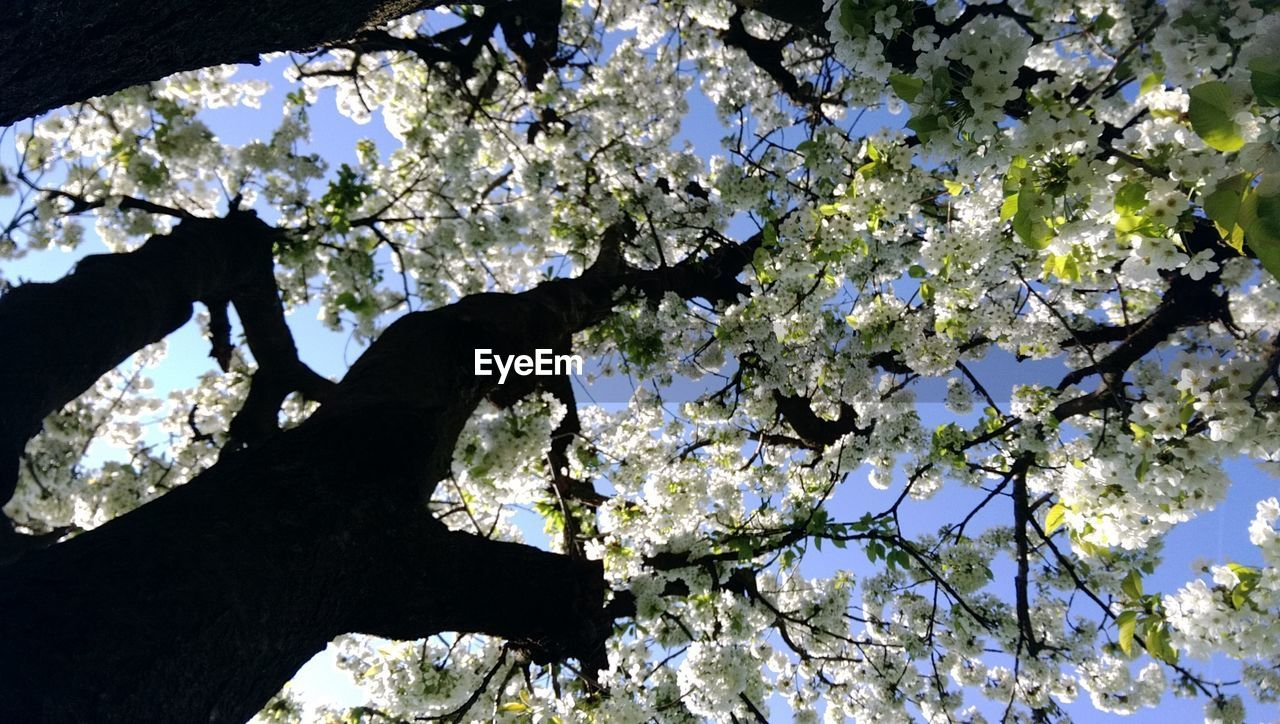 tree, branch, flower, nature, growth, blossom, fragility, low angle view, beauty in nature, no people, springtime, day, outdoors, one animal, freshness, animal themes, close-up, sky, mammal