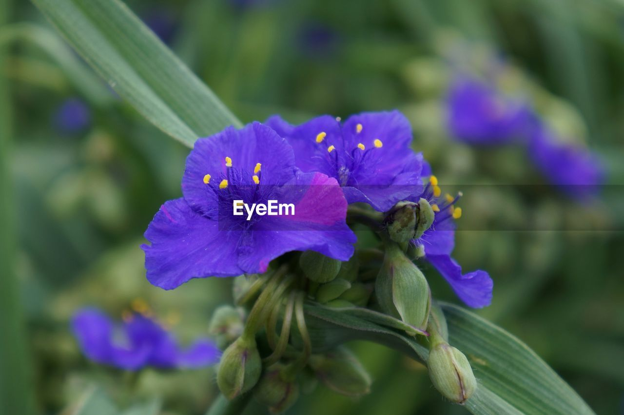flower, flowering plant, plant, vulnerability, fragility, beauty in nature, petal, growth, freshness, flower head, inflorescence, close-up, purple, invertebrate, focus on foreground, nature, animals in the wild, insect, animal themes, one animal, no people, pollen, pollination, iris - plant