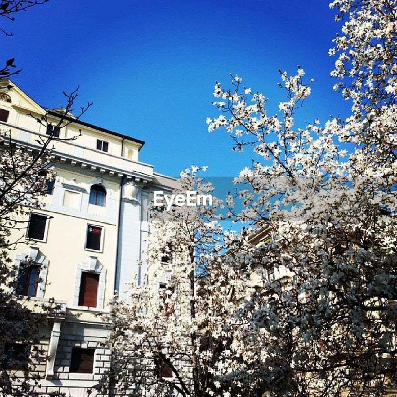 tree, low angle view, architecture, building exterior, branch, flower, built structure, fragility, no people, blossom, day, springtime, clear sky, apple blossom, outdoors, nature, blue, growth, beauty in nature, freshness, sky
