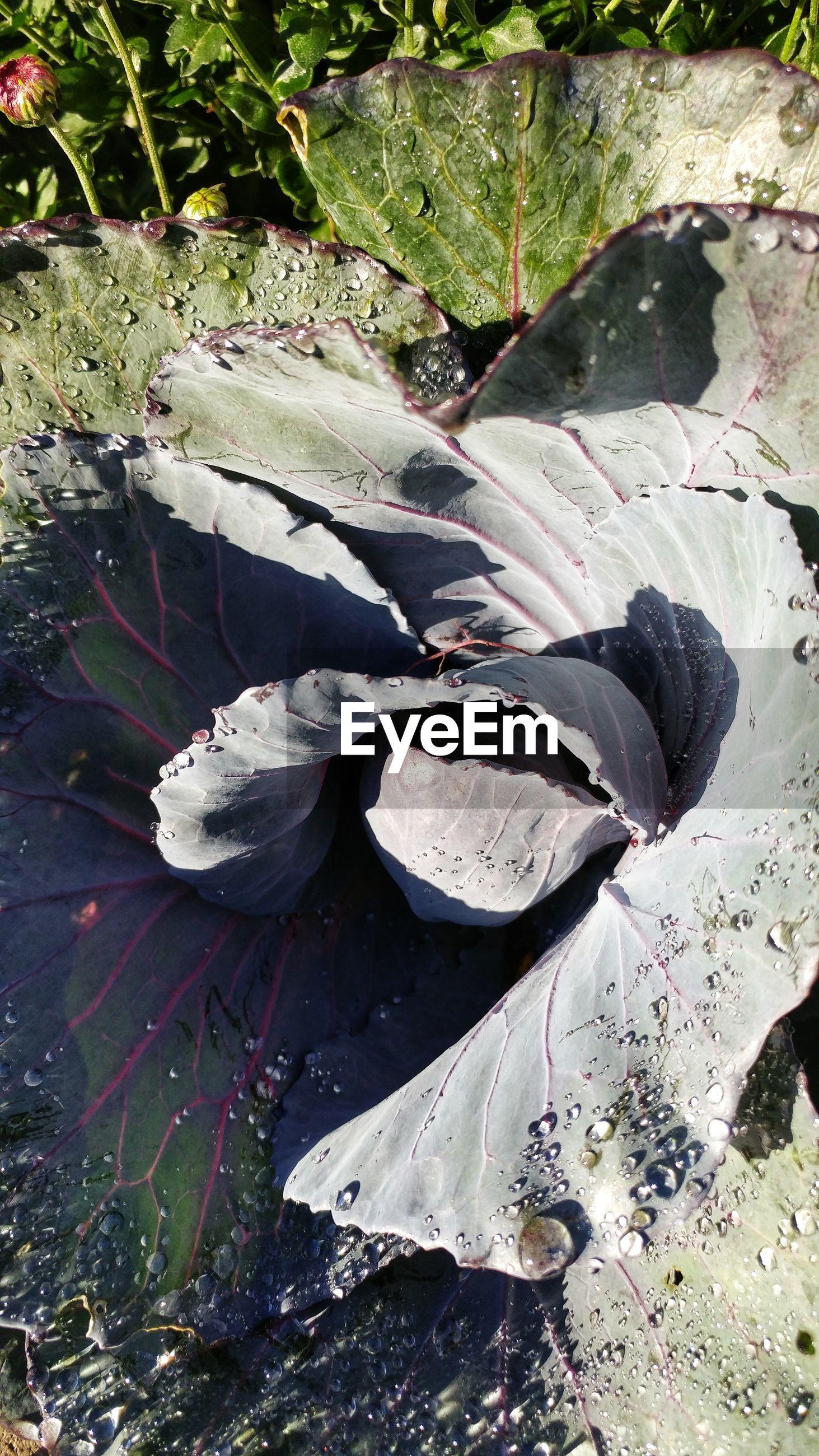 HIGH ANGLE VIEW OF CRAB ON PLANTS