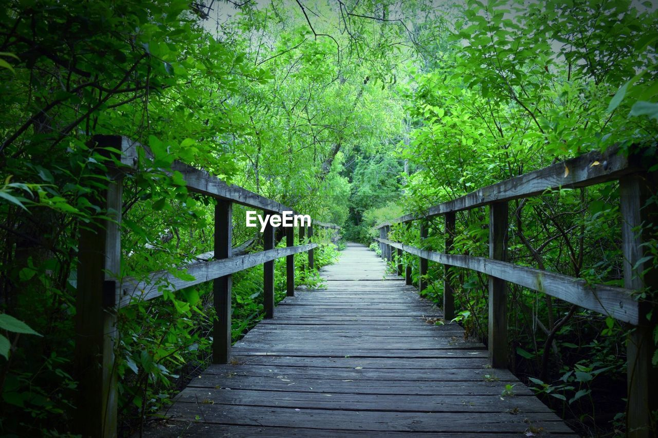 plant, tree, direction, forest, the way forward, green color, land, tranquility, wood - material, nature, growth, footpath, bridge, railing, foliage, lush foliage, built structure, day, beauty in nature, connection, no people, footbridge, outdoors, diminishing perspective, wood, bridge - man made structure, long