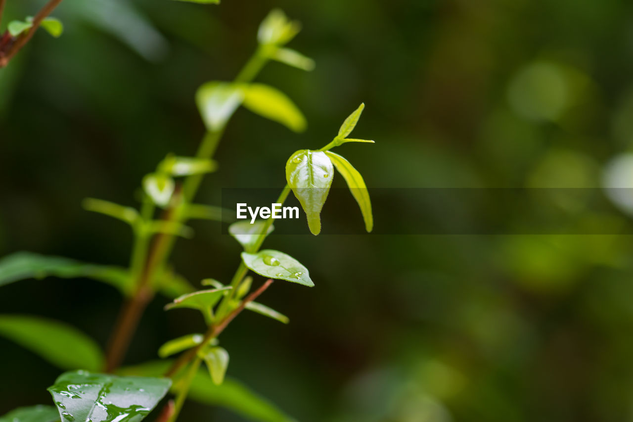 plant, growth, green color, beauty in nature, vulnerability, leaf, plant part, fragility, close-up, freshness, flower, nature, no people, flowering plant, day, selective focus, focus on foreground, beginnings, outdoors, new life, flower head