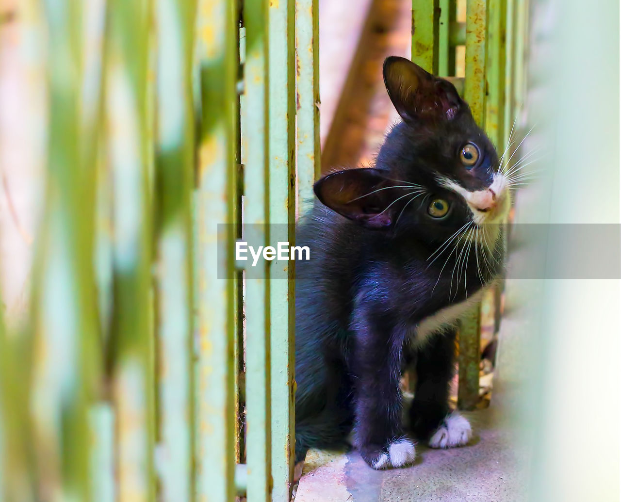 mammal, domestic, pets, domestic animals, cat, domestic cat, feline, one animal, vertebrate, no people, sitting, day, looking, selective focus, whisker, portrait, close-up, bamboo - plant
