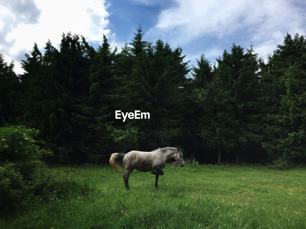 Horse on grassy field by trees against sky