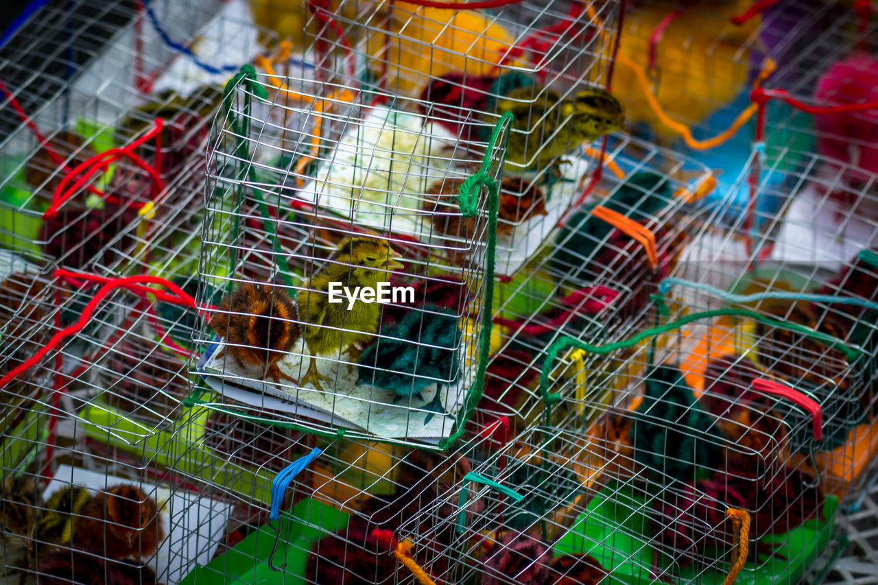 High Angle View Of Baby Chickens In Cage At Market