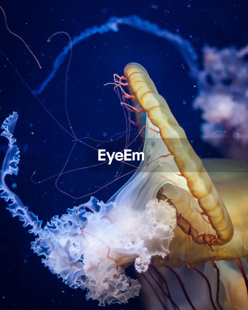 Close-Up Of Jellyfishes Swimming At Aquarium