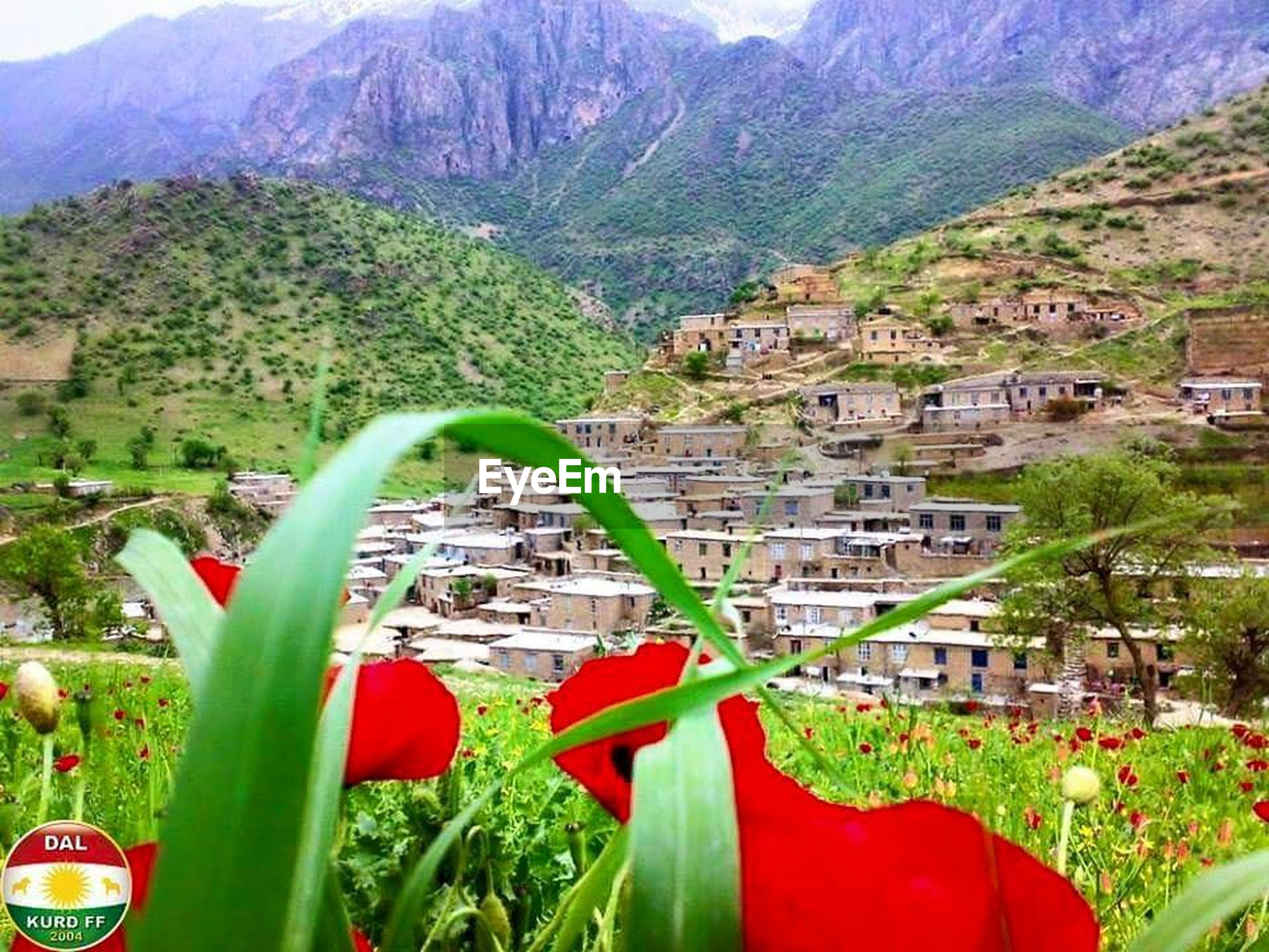 mountain, building exterior, built structure, architecture, red, house, tree, plant, mountain range, residential structure, nature, day, beauty in nature, growth, high angle view, outdoors, green color, residential building, town, no people