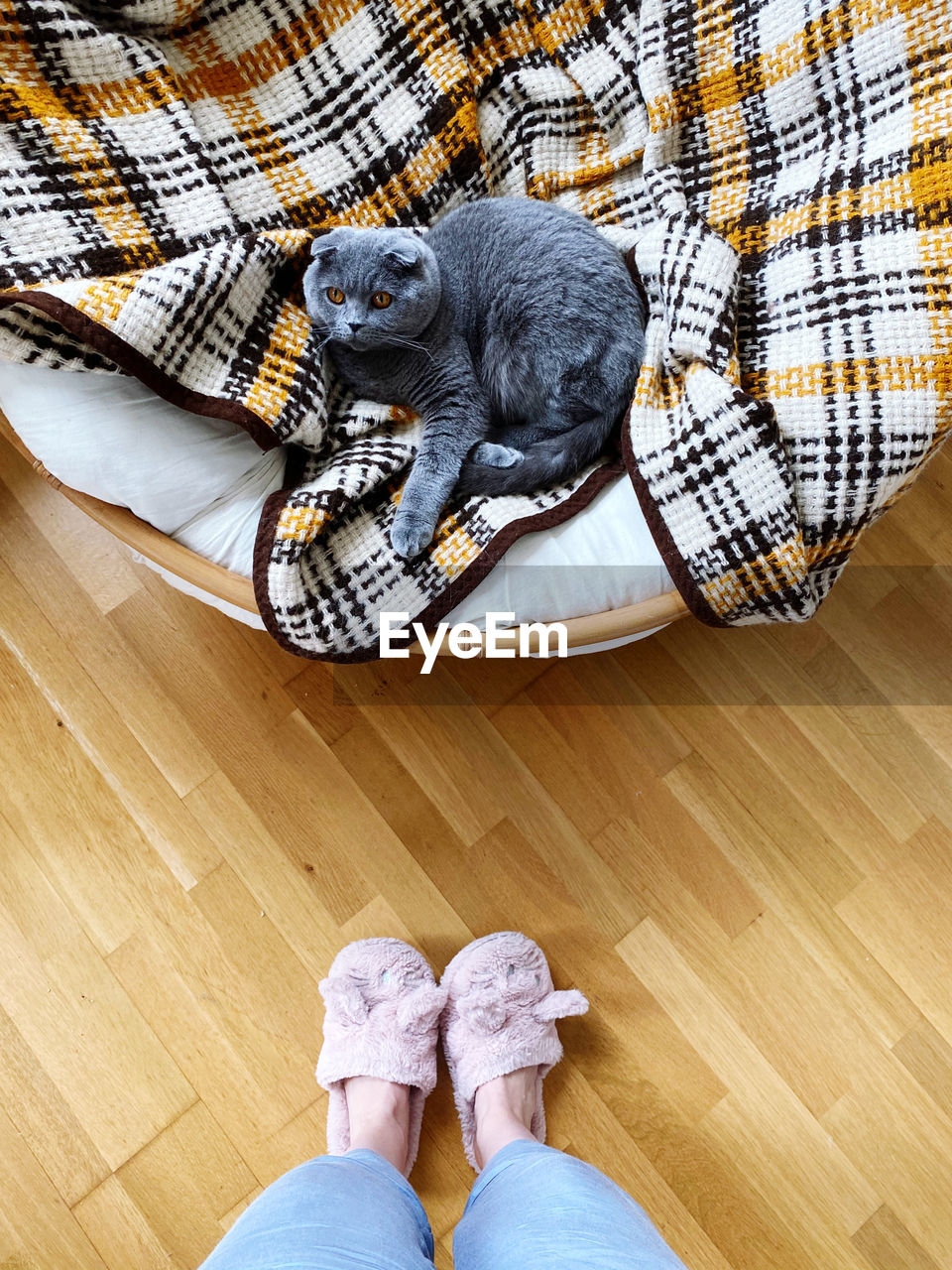 Feet of a person wearing slippers at home and a sleeping cat