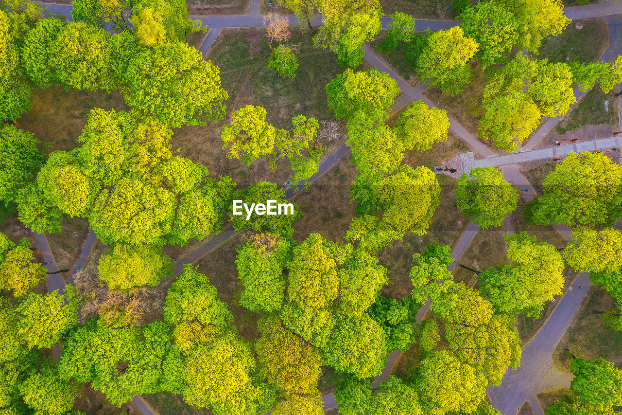 plant, green color, growth, aerial view, beauty in nature, high angle view, tree, day, nature, landscape, scenics - nature, environment, rural scene, no people, land, agriculture, tranquility, forest, tranquil scene, outdoors