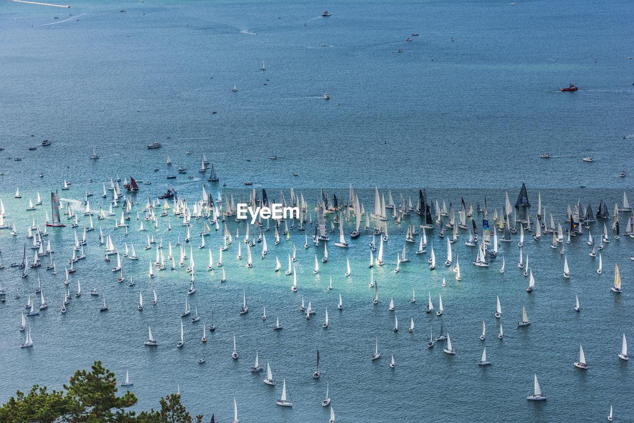 HIGH ANGLE VIEW OF SEAGULLS ON LAND