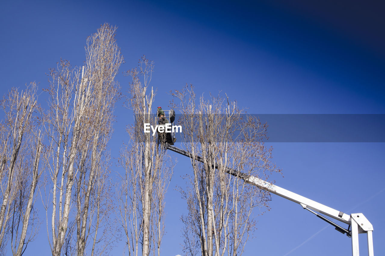 sky, low angle view, blue, nature, tree, clear sky, plant, day, no people, bare tree, outdoors, branch, beauty in nature, copy space, lighting equipment, sunlight, winter, cold temperature